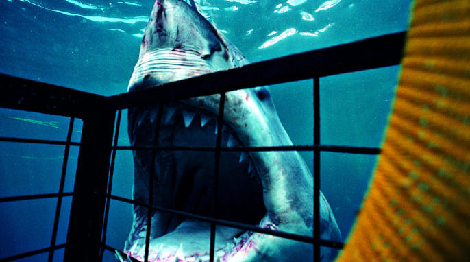 How Do Shark Teeth Bite?