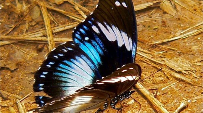How Nature Uses Physics to Create the Color Blue