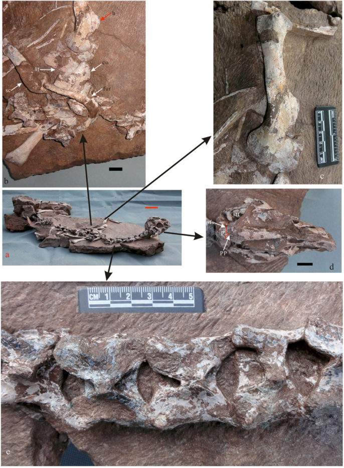 Oviraptors in the Wild