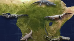 Screening Biodiversity