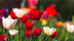 Gardening Alternatives to Pesticides