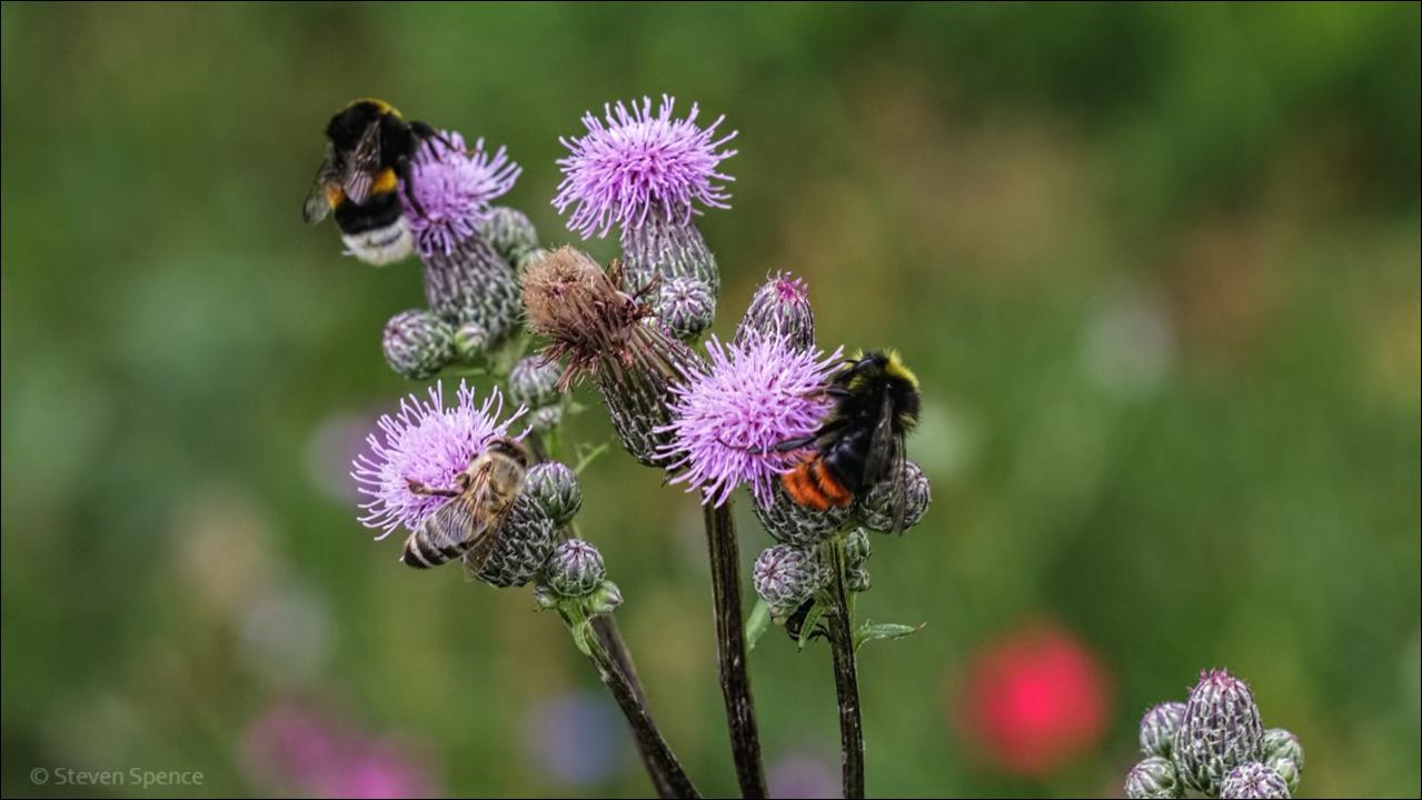 Bee Friendly Garden