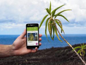 Citizen Scientists Invited to Identify Plants
