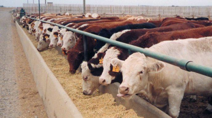 New Ways to Reduce Antibiotics in Food Animals by 2030.