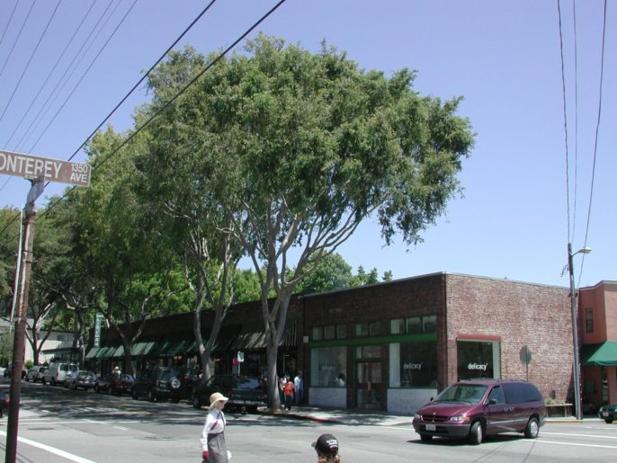 California's Urban Forests Have Lowest Tree Cover per Resident