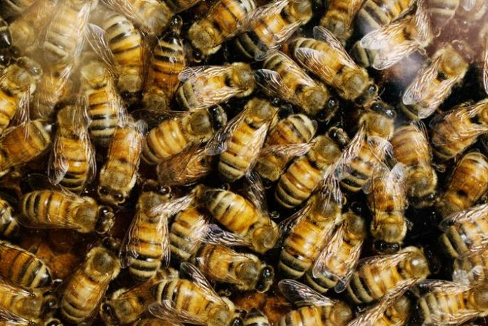 Honeybees Are Attracted to Fungicides and Herbicides