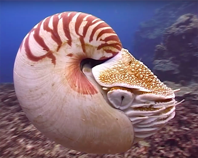 How Squids Lost Their Shells