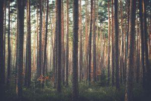 Deforestation Article
