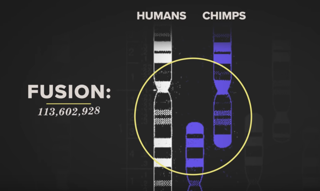 Science Connected and It's Okay to be Smart: Proof of evolution is in your DNA