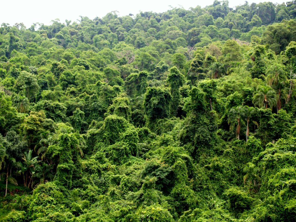 Amazon Rainforest in Brazil, photo by Nick V. (CC BY-SA 2.0)