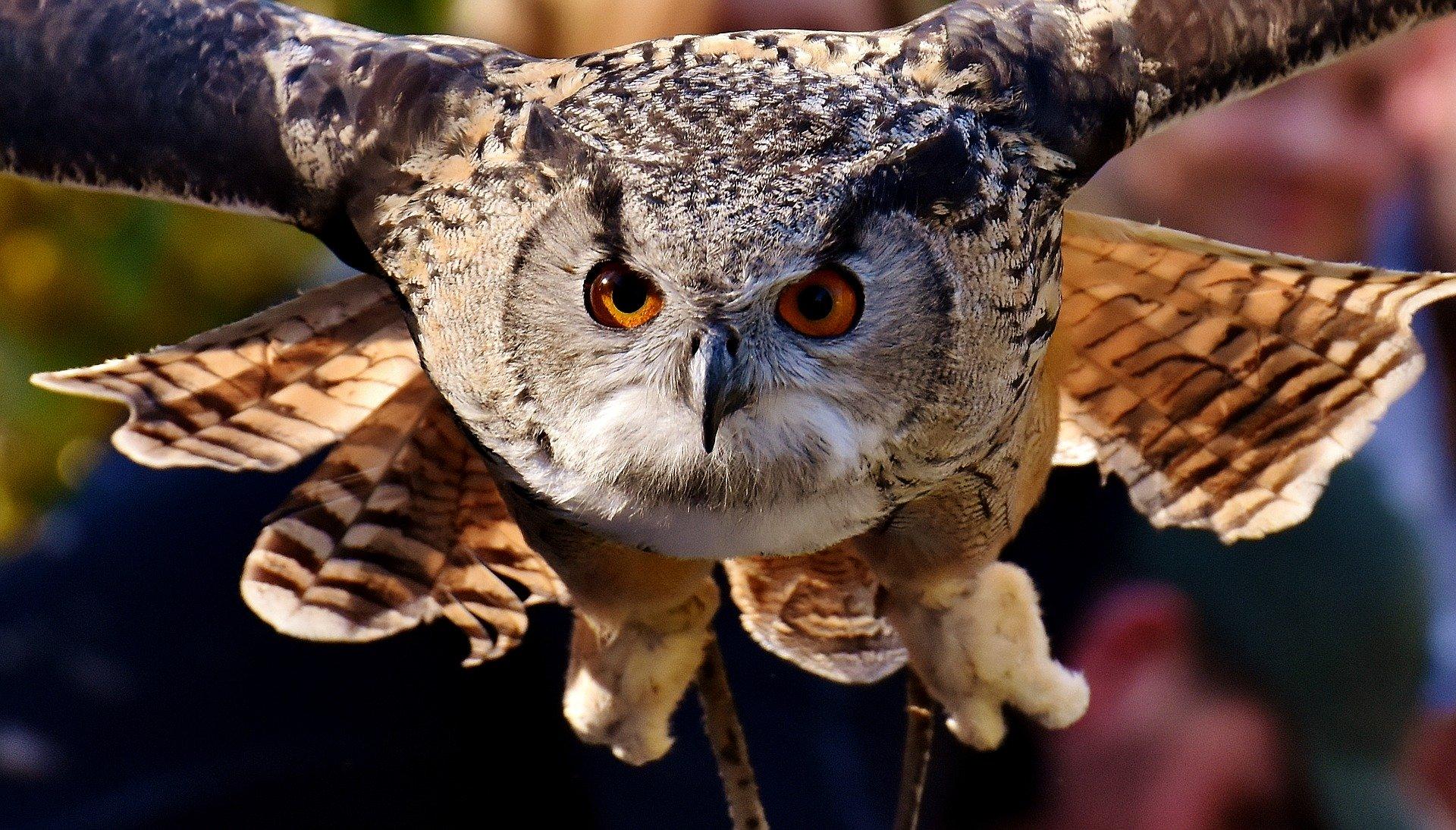 SuperbOwl: Image credit: Alexas_Fotos via Pixabay