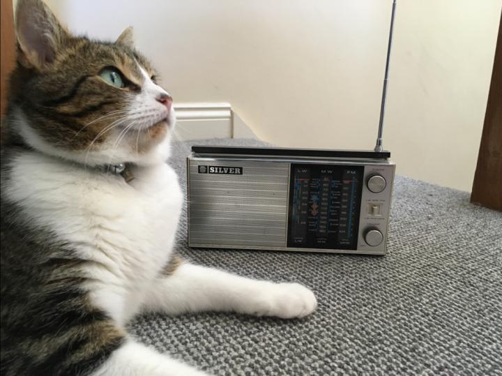 Cats calmed by music
