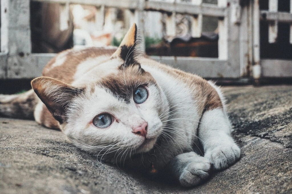 cats, stress, and music