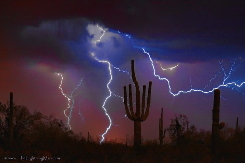 Saguaro Lightning Storm by Bo Insogna