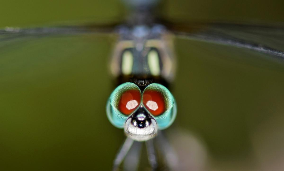 Citizen Science Projects about Insections