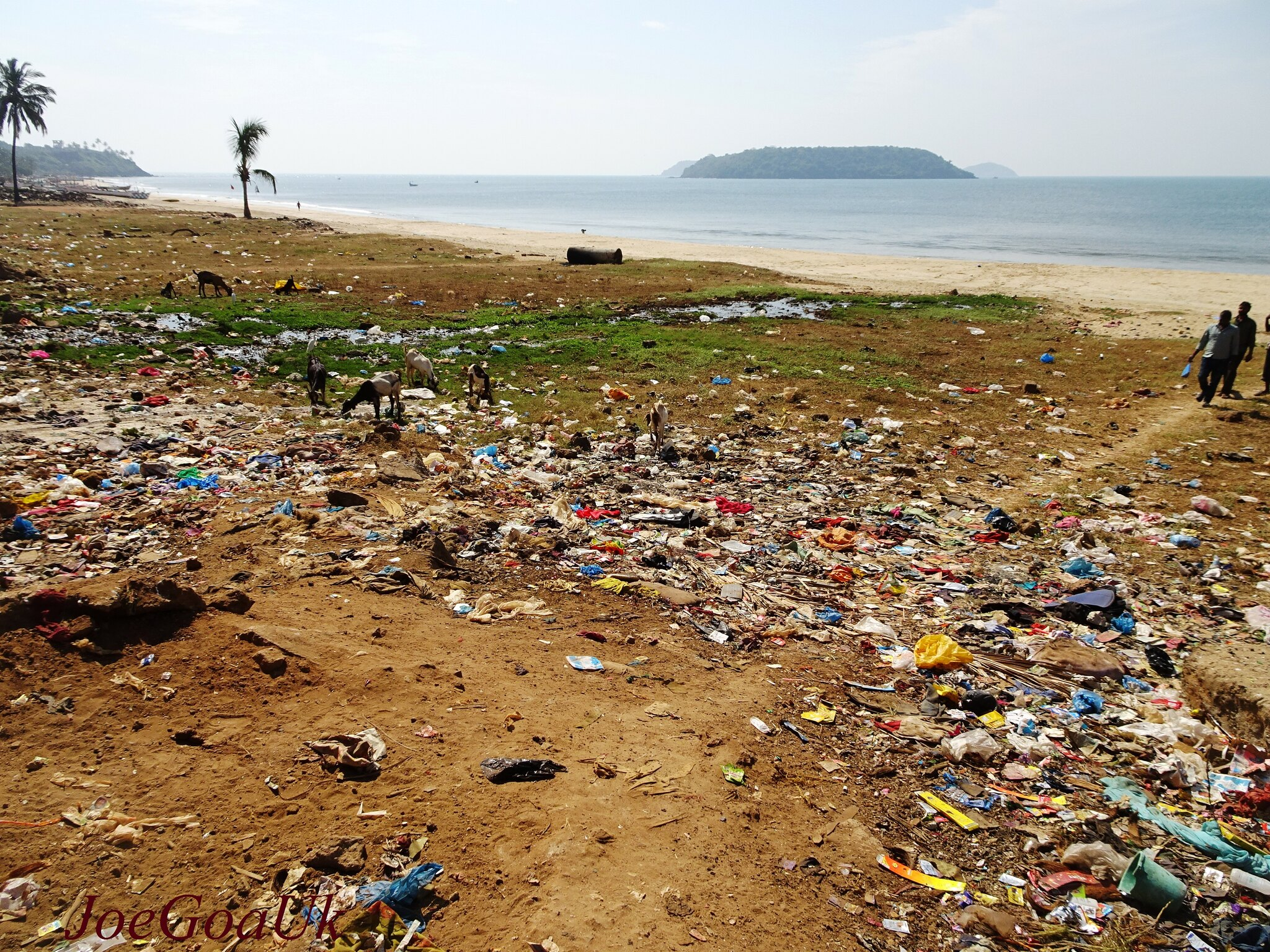 ocean garbage patch