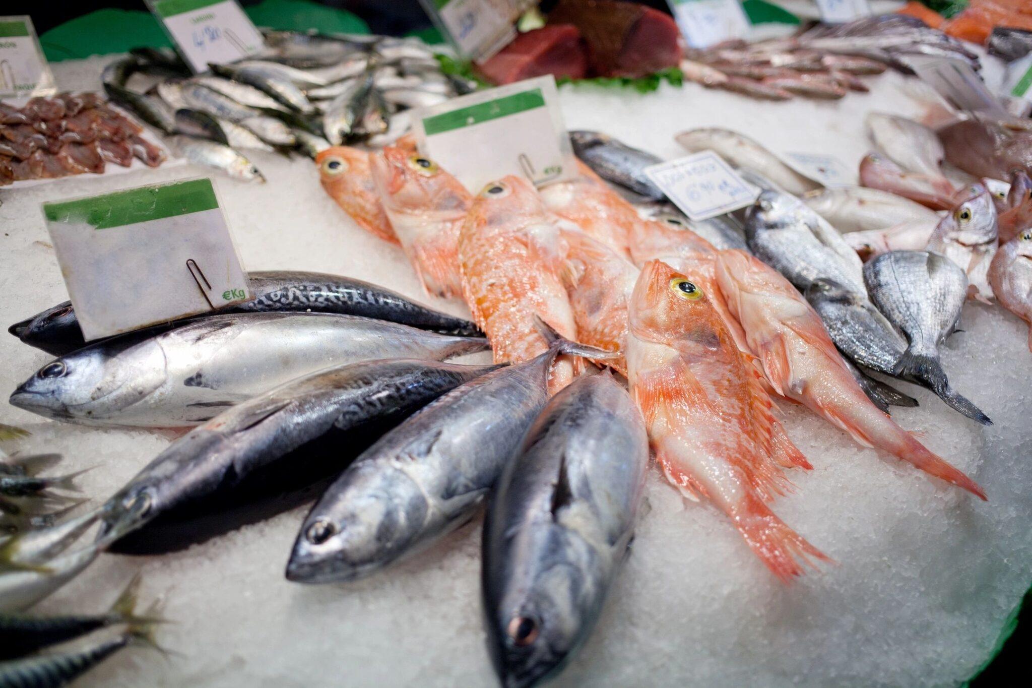 plankton predict red sea fishing success