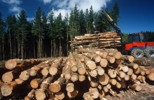 clear cutting forests and soil carbon