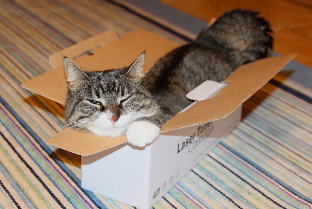 cat in box, box cat, simon's cat logic videos