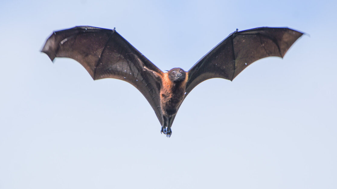 Fight the Bat-Killing Fungus—Cool Down Bat Homes