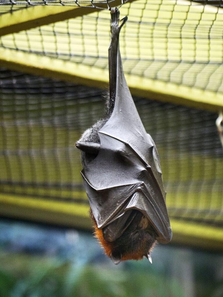 help fight bat-killing fungus