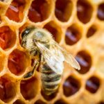 Becoming a Beekeeper
