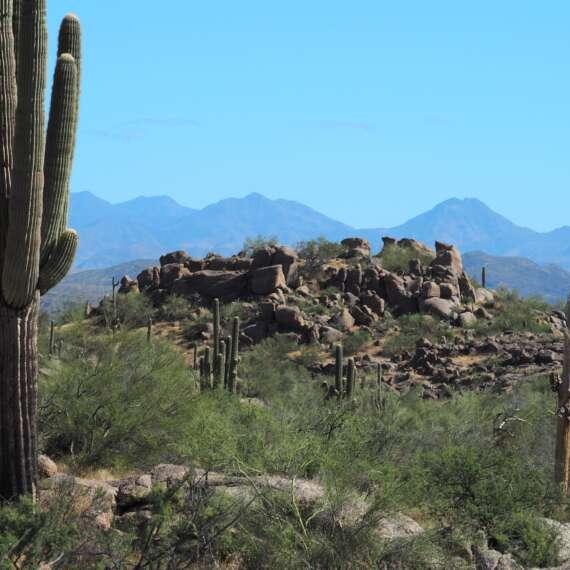 Granite Mountain Pest Control