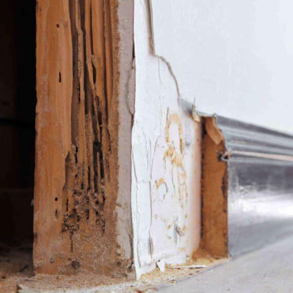 Termite Damage Repair Cost