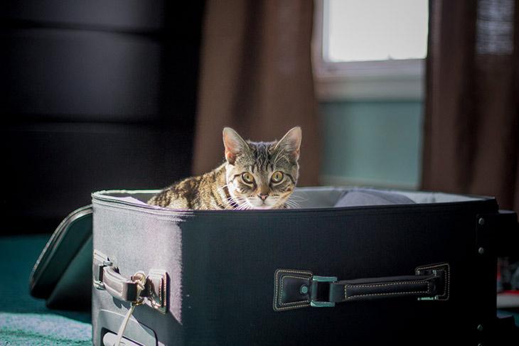 Pets Travel Road Trip Tips