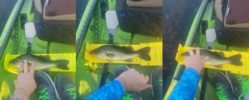 Yak Gear Fish Stik Study Medium Fish