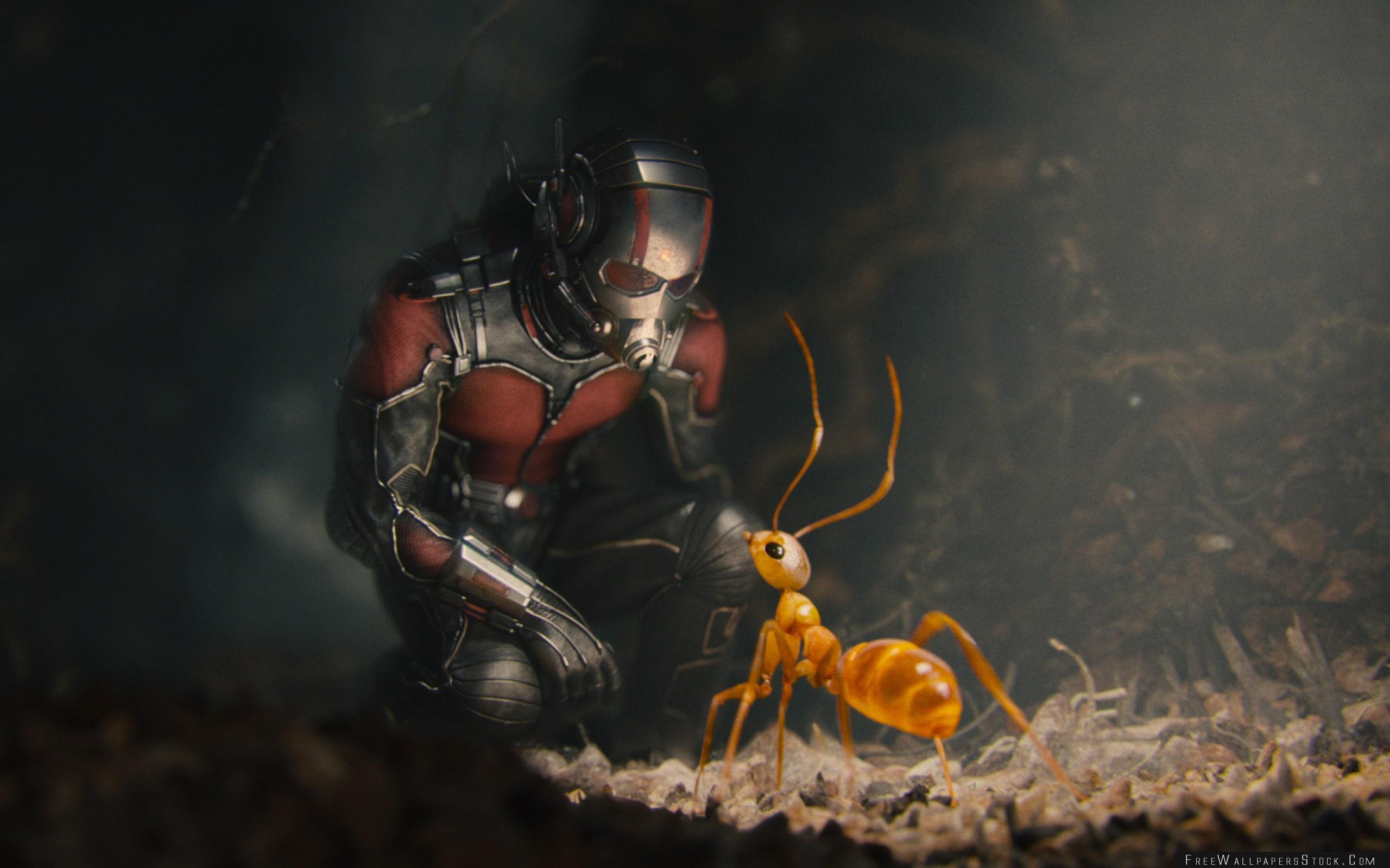 Download Free Wallpaper Ant Man Marvel