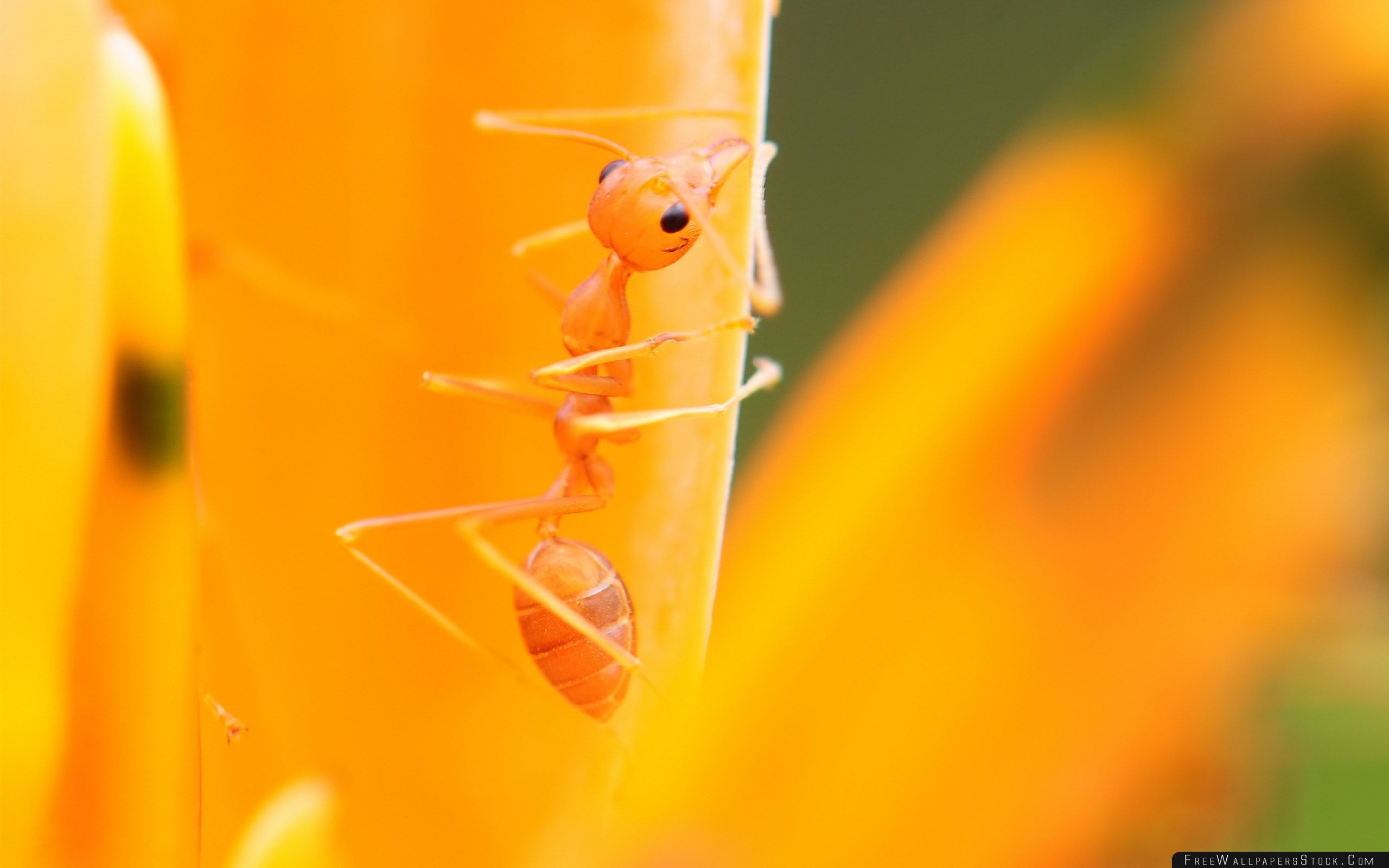 Download Free Wallpaper Ant Petals Flower Bright