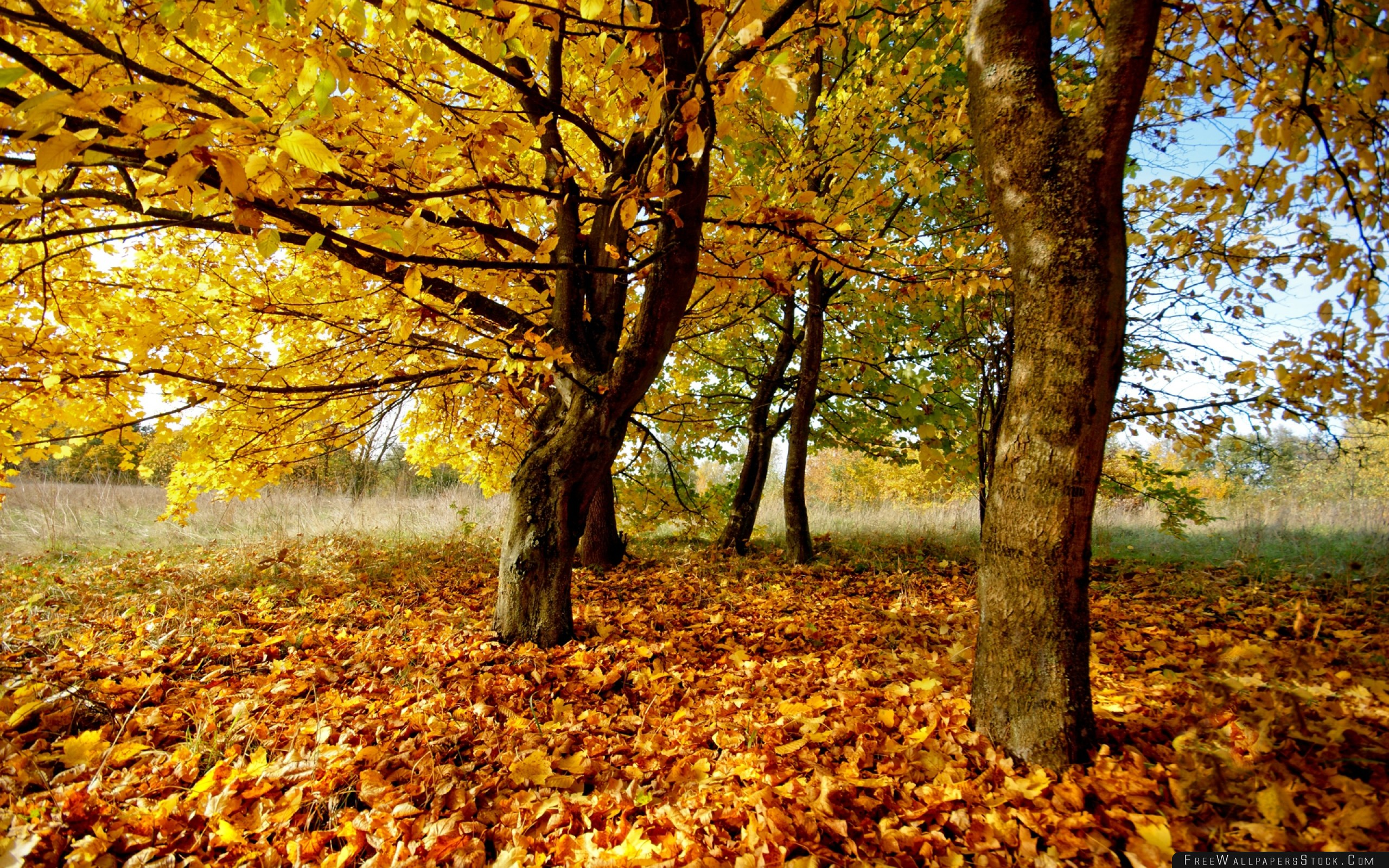 Download Free Wallpaper Autumn Leaves Foliage Dry