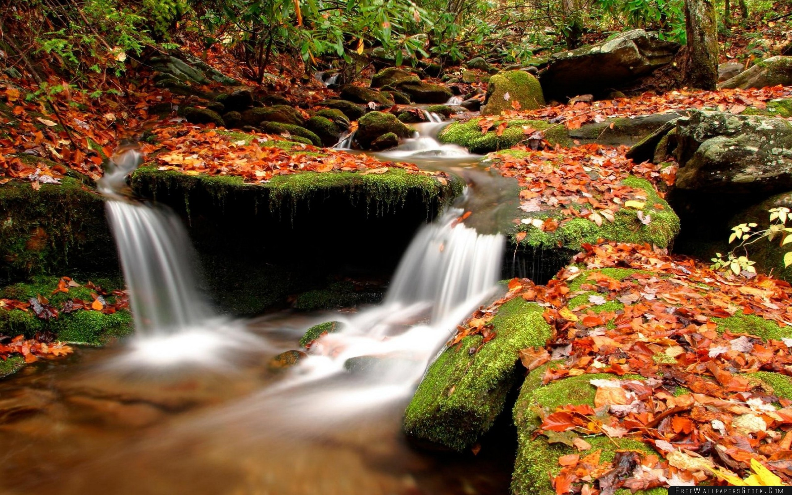 Download Free Wallpaper Autumn Leaves Moss Stones Water Wood River Source