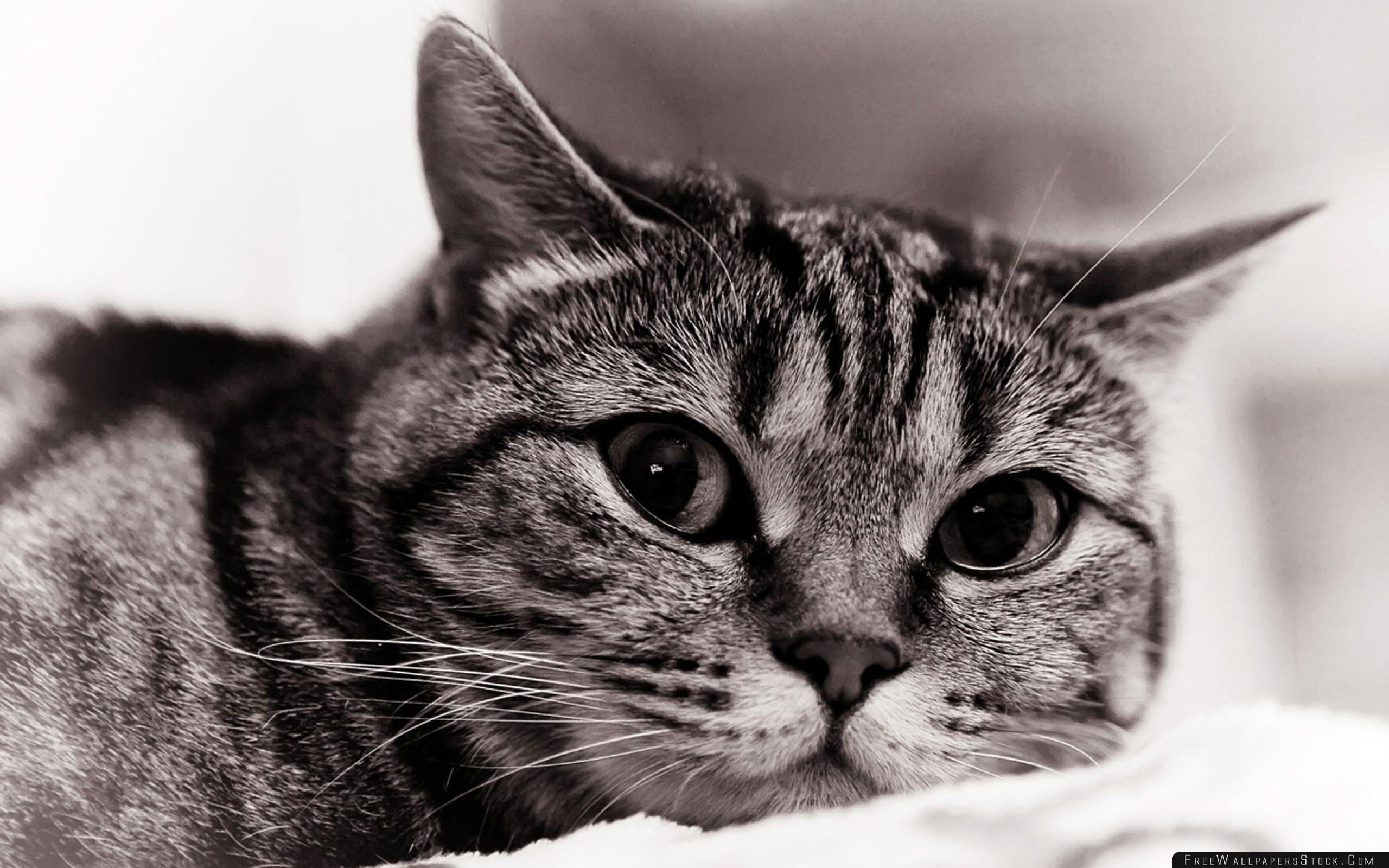 Download Free Wallpaper Cat Face Eyes Black White Sadness