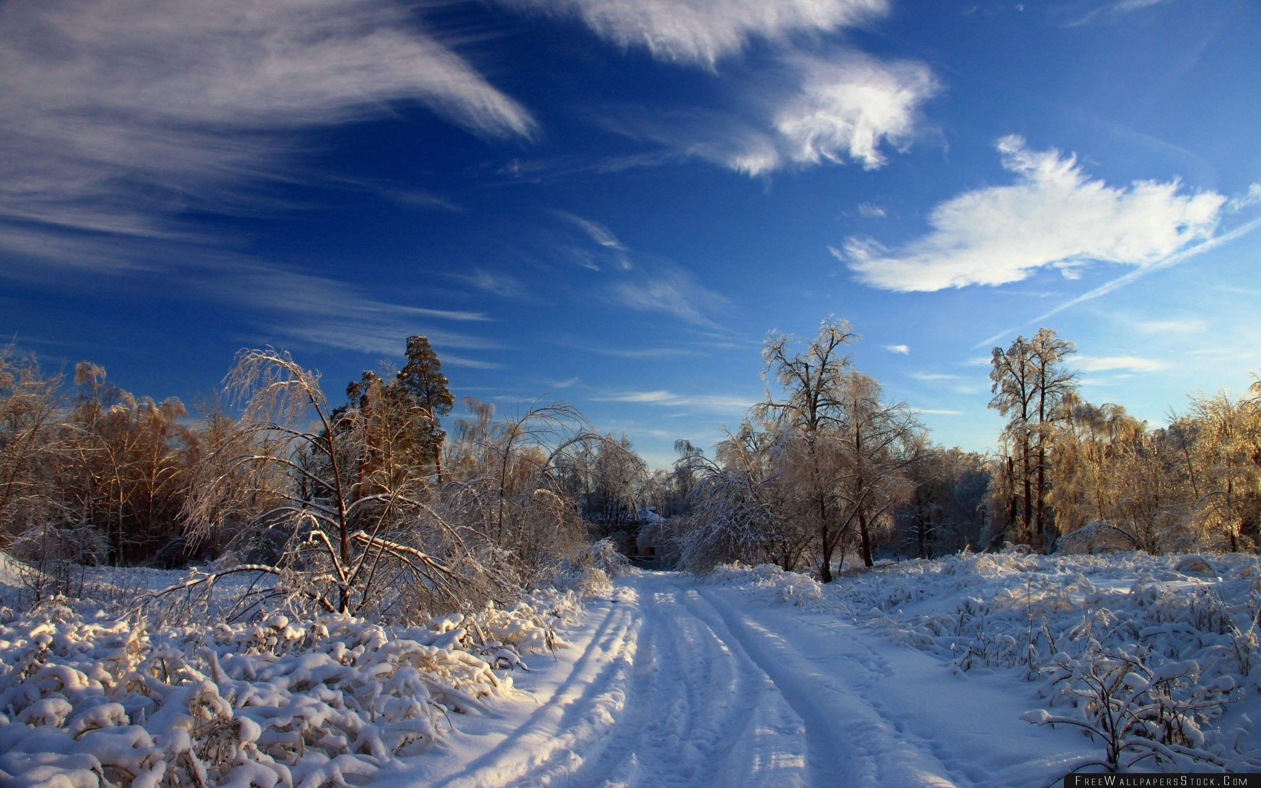 Download Free Wallpaper Winter Snow Road Traces Bushes Trees Snowdrifts Clouds Sky Clear
