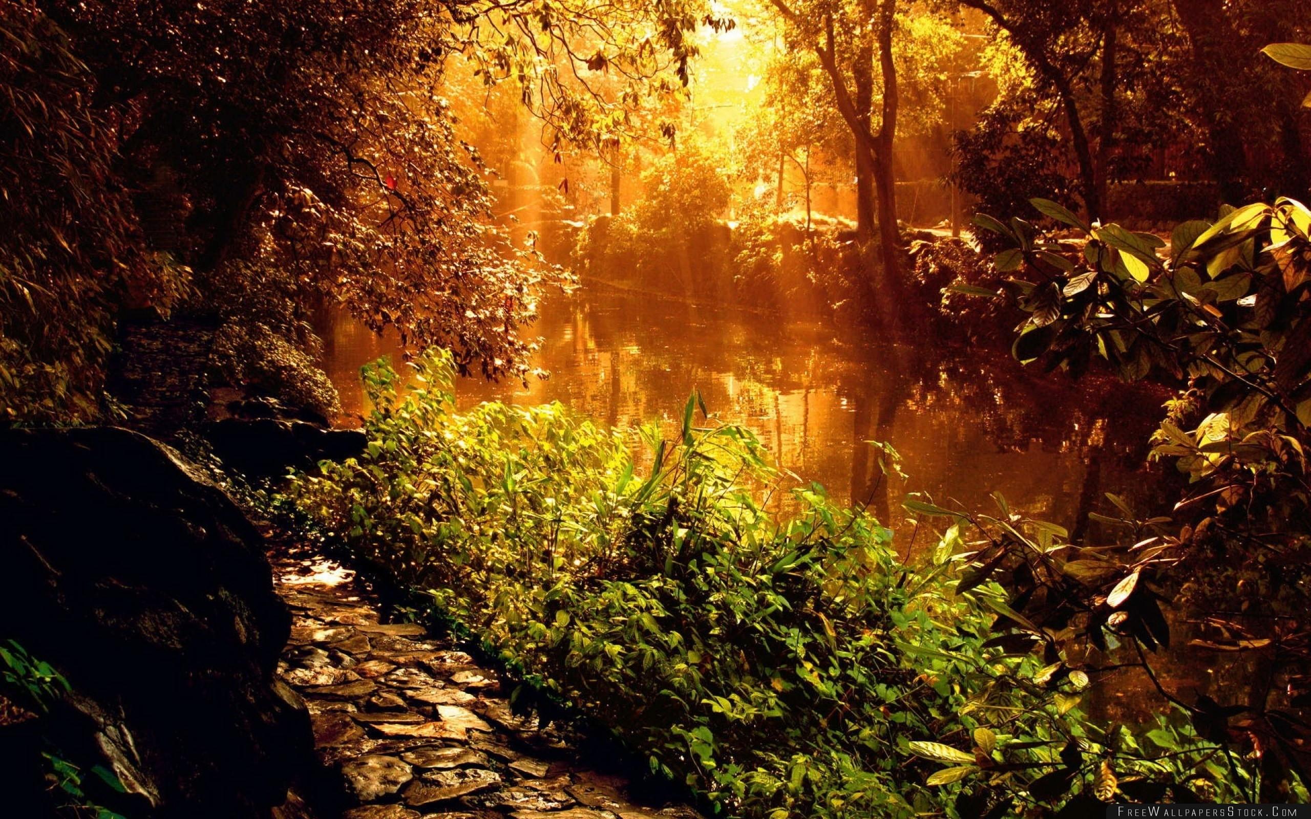 Download Free Wallpaper Wood Footpath Stones Sunlight Beams Trees Vegetation