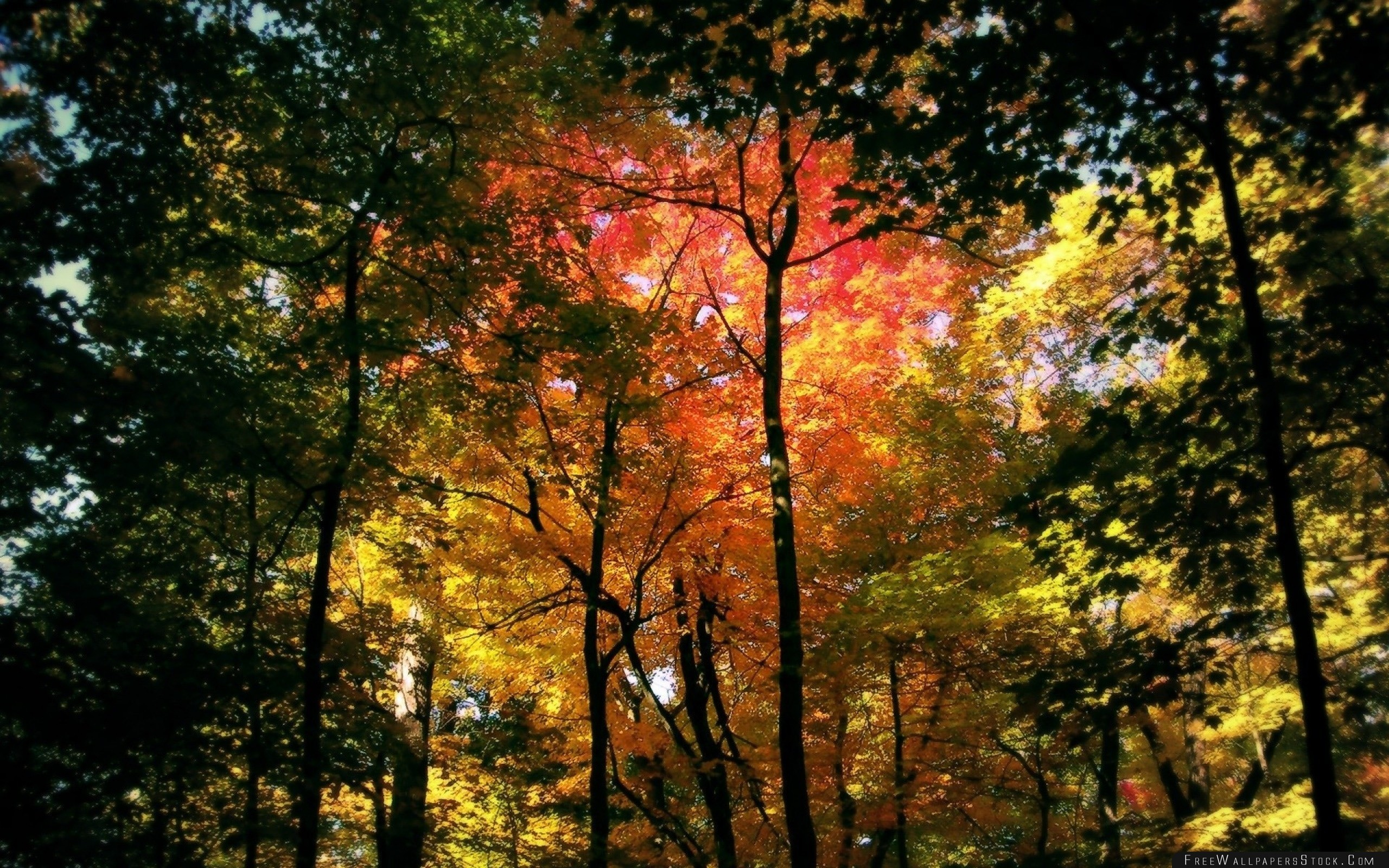 Download Free Wallpaper Wood Trees Autumn Crones Colors Yellow Red Green