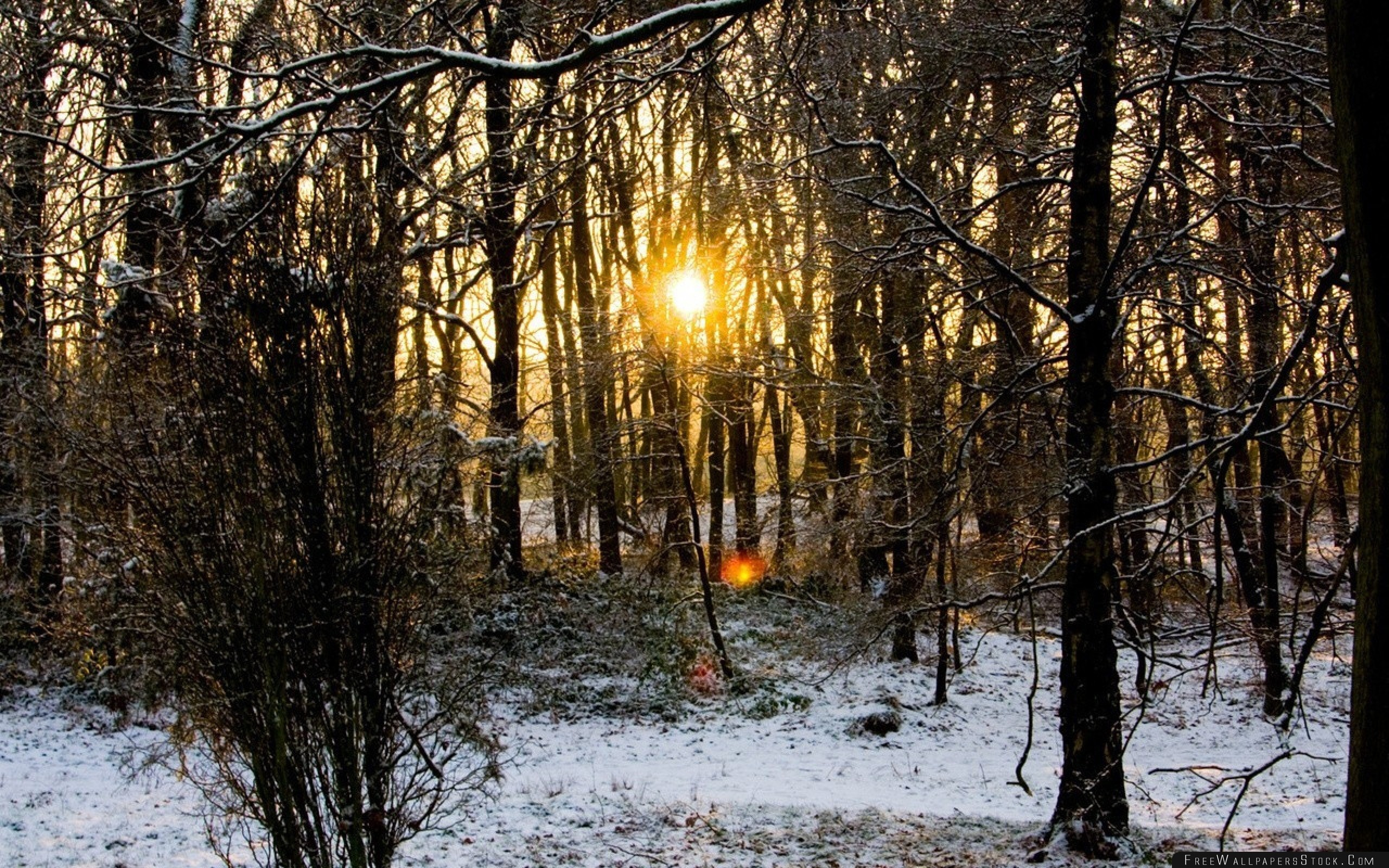 Download Free Wallpaper Wood Trees Branches Autumn Snow Dawn Cold Sun