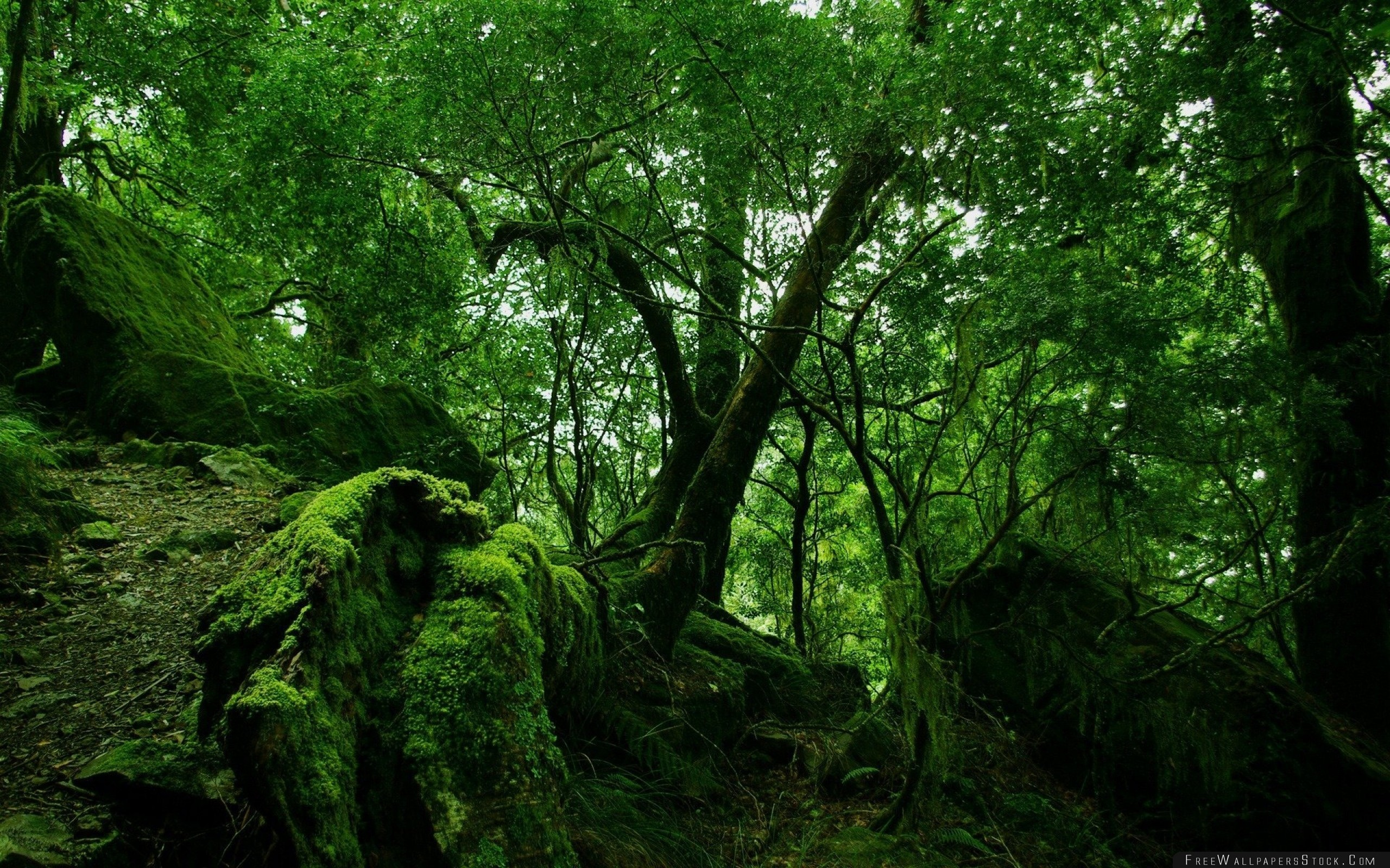 Download Free Wallpaper Wood Trees Thickets Green Moss Vegetation Bushes Stones Leaves