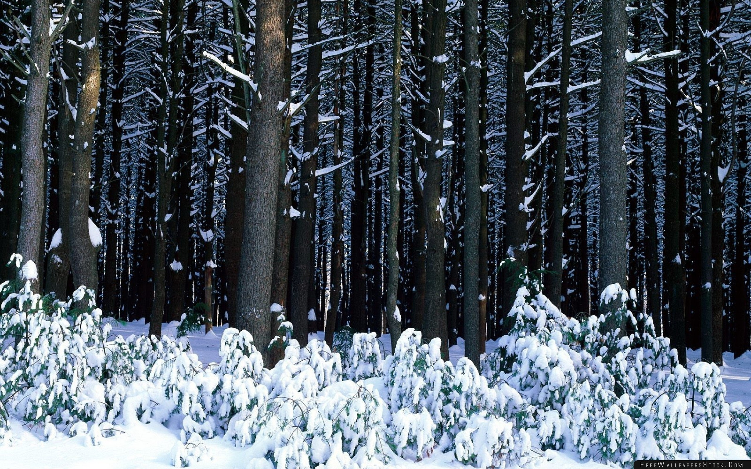 Download Free Wallpaper Wood Trees Trunks Bushes Snowdrifts