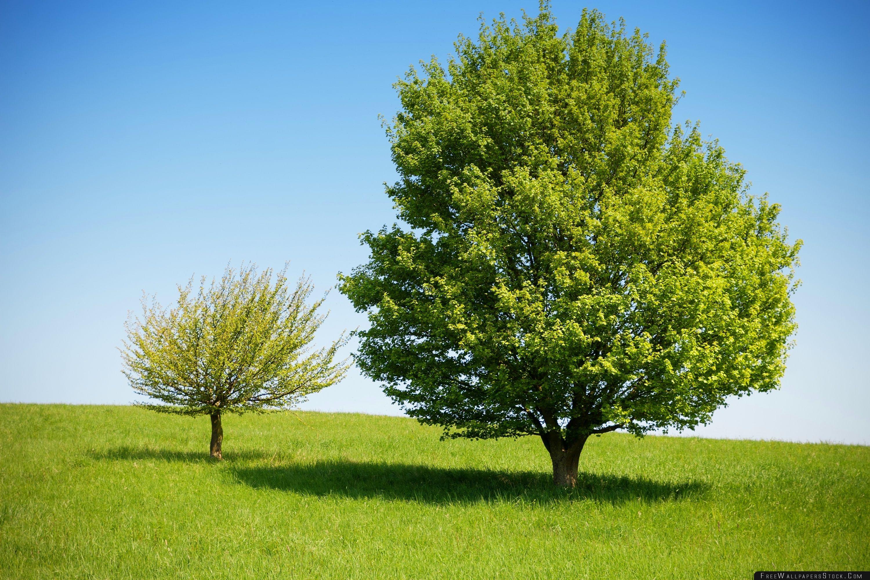 Download Free Wallpaper Spring Landscape Nature