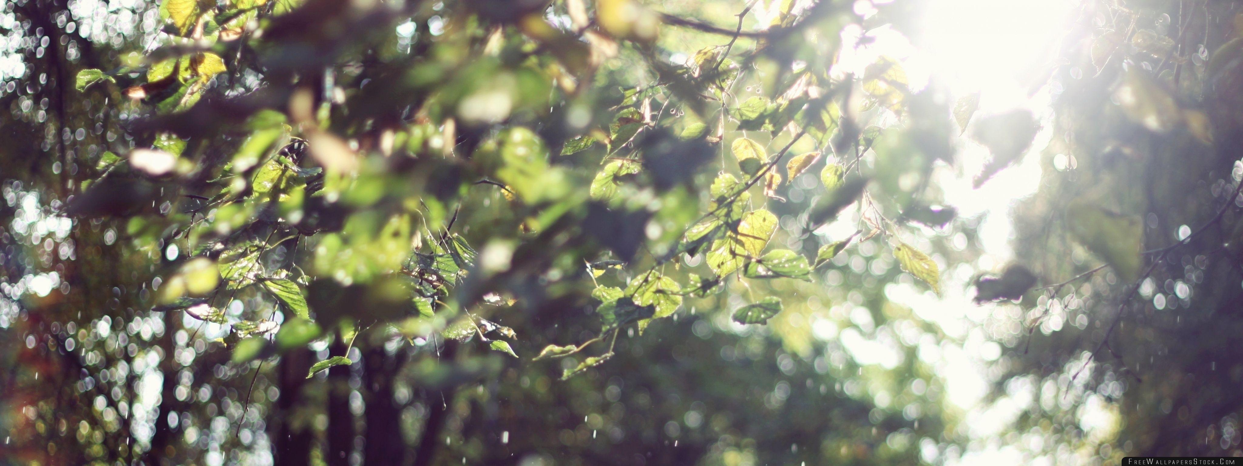 Download Free Wallpaper Sun Light Summer