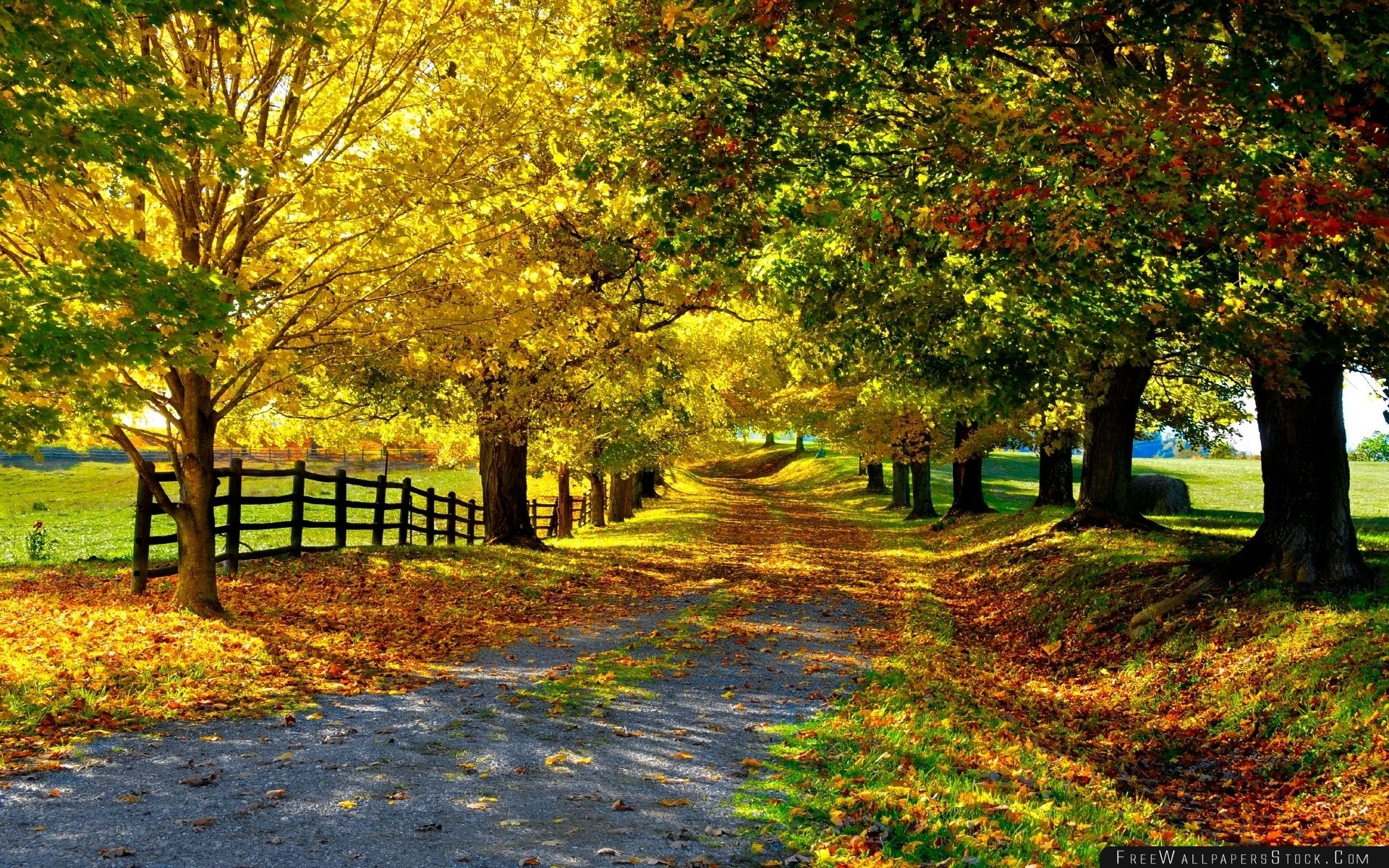 Download Free Wallpaper The Most Beautiful Autumn