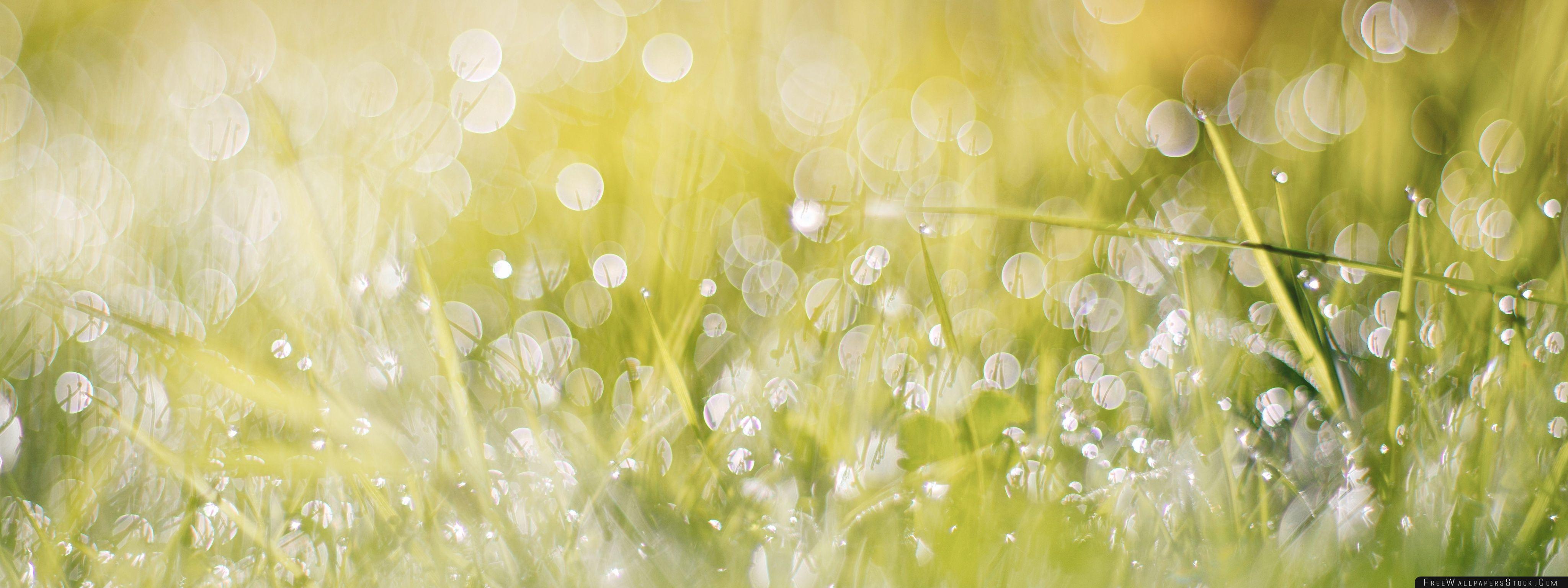Download Free Wallpaper Wet Grass Bokeh