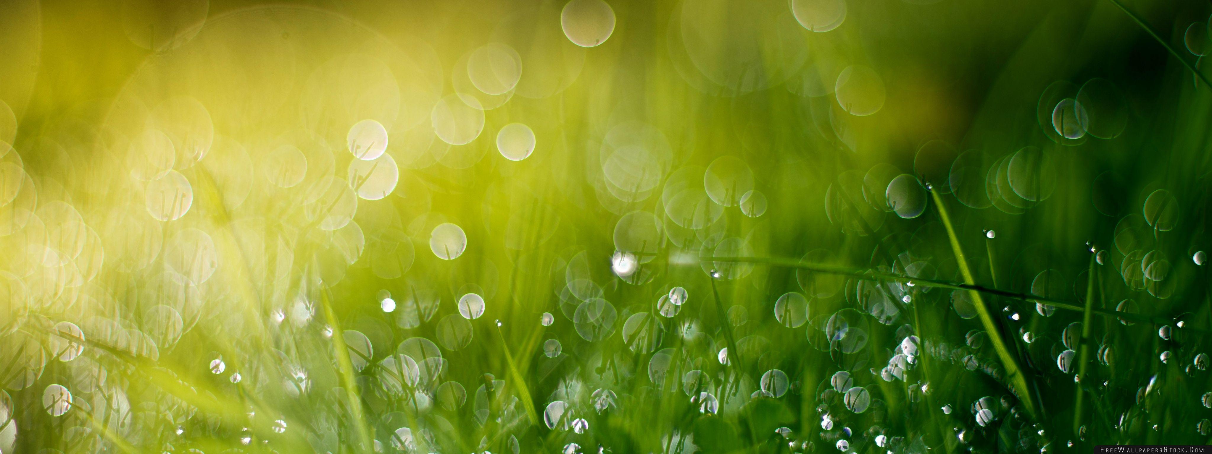 Download Free Wallpaper Wet Grass Bokeh Summer