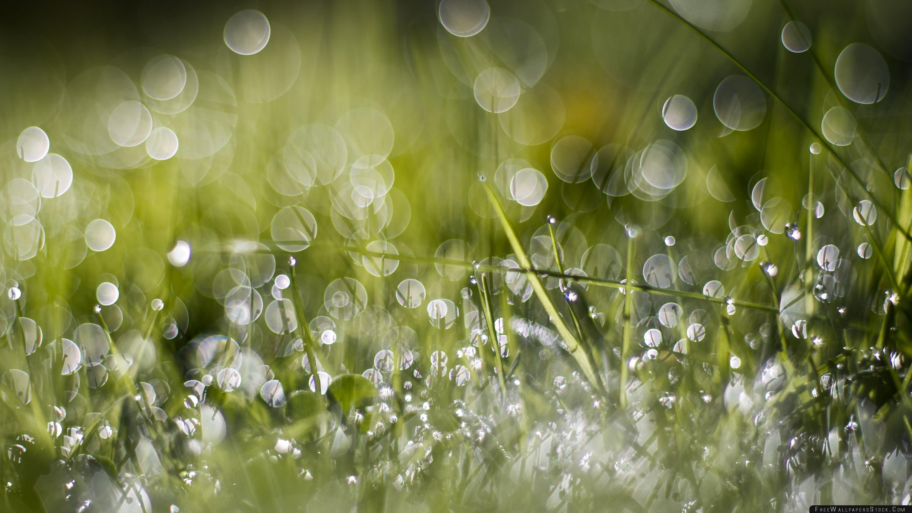 Download Free Wallpaper Wet Green Grass