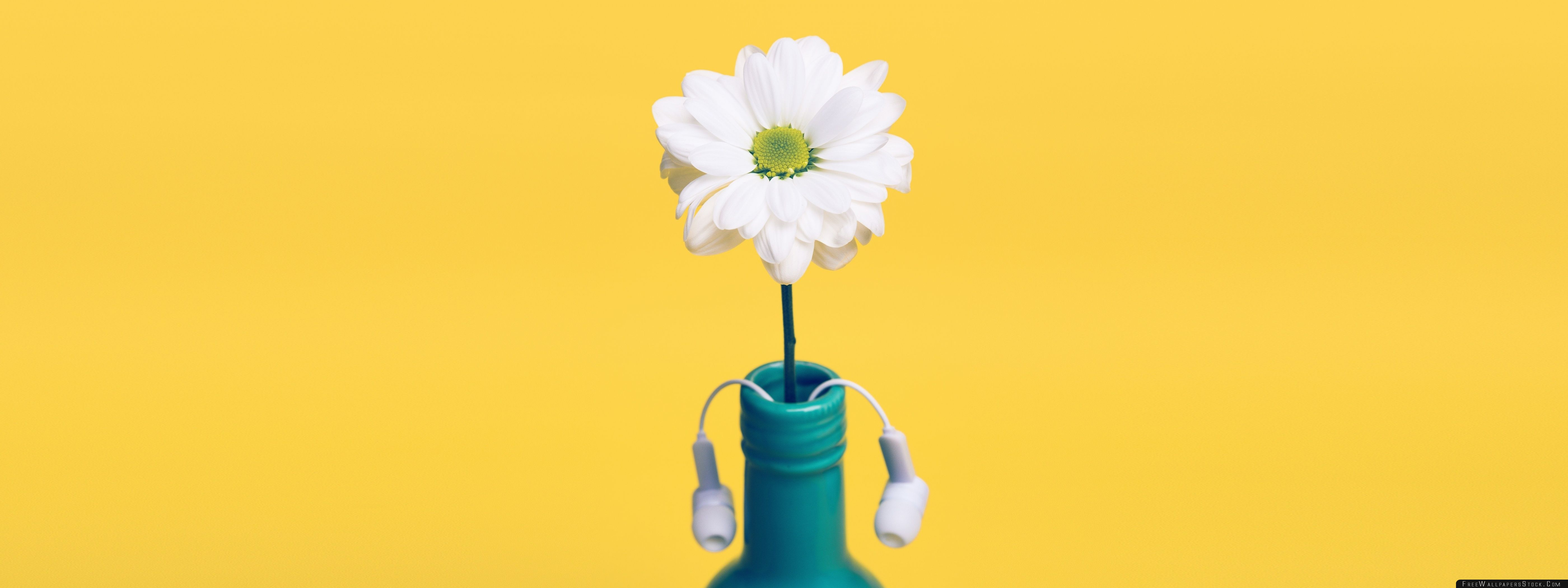 Download Free Wallpaper White Daisy   Blue Bottle Yellow Background