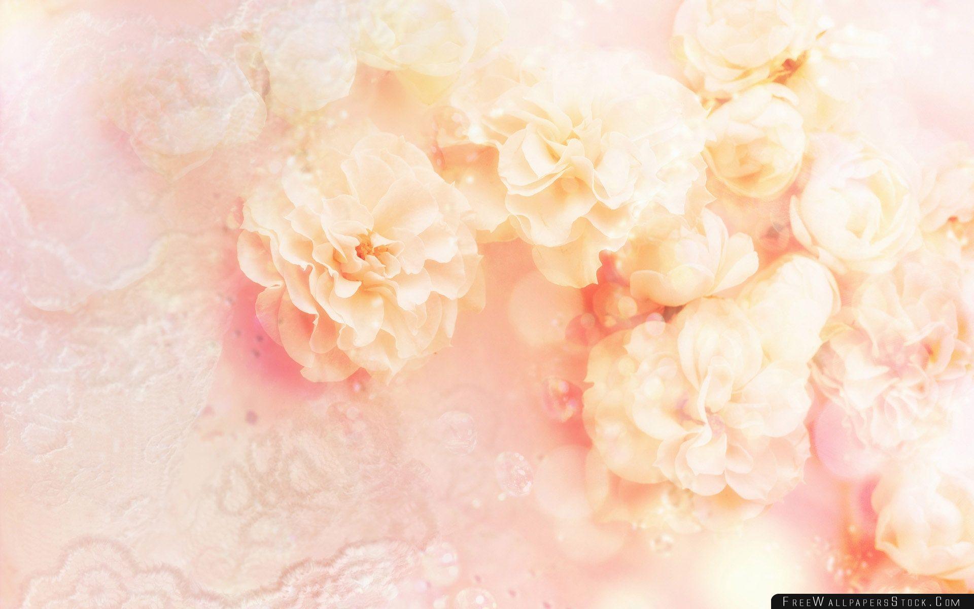 Download Free Wallpaper White Wild Rose