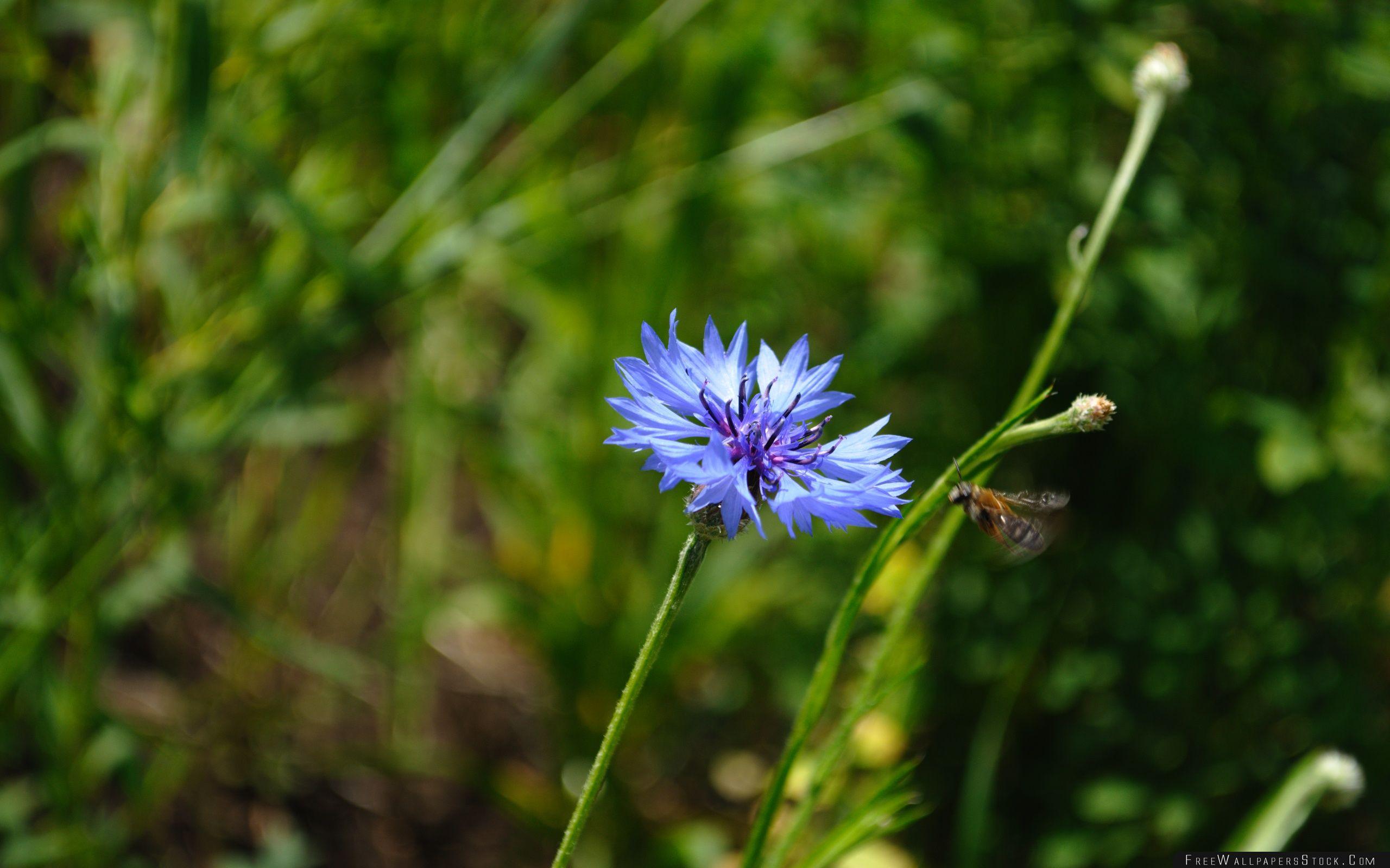 Download Free Wallpaper Wildflower Summer